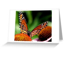 Monarch On Cones Greeting Card