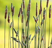 Weeds in a Field by Richard Skoropat