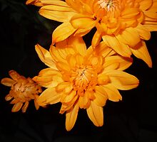 Orange Stars by rhian mountjoy
