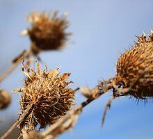 Weeds in the Wind by Richard Skoropat
