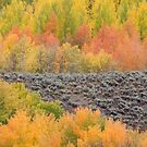 Bands of Fall Color by A.M. Ruttle