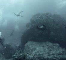 Seal Landscape by Rick Grundy