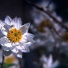 Paper Daisy Daze by Beth A