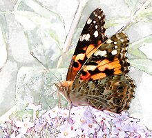 'Painted Lady in Wonderland' by Scott Bricker