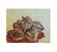 Mahogany nuts, Barbados Art Print