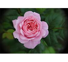 Rosey cheeked Photographic Print