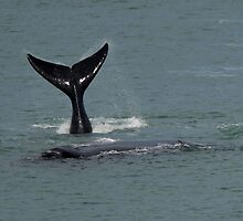 Whale Tail 03 by Yanni