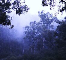 misty trees by Terri  Kruithof