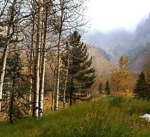 Misty Mountain Meadow of Aspens near Sievers Mountain by Bob Spath