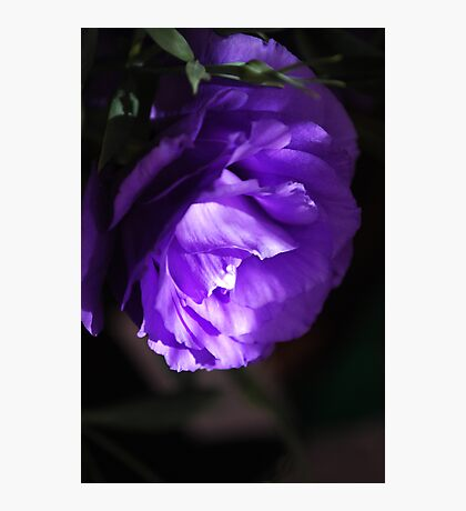 Soft lithianthus mystery.  Photographic Print