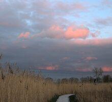Moonlit Marsh by woodlandninja