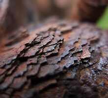 Layers of rust by woodlandninja