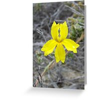 woolly goodenia Greeting Card