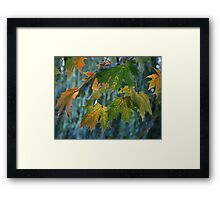 Colours of Autumn Framed Print