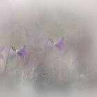 Magic Spring by EbyArts