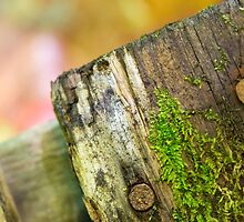the old piece of fence by Manon Boily