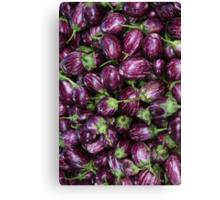 Aubergine, Eggplant, Brinjal, Terong Canvas Print