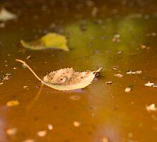 Rusty water by lokanin