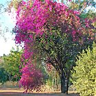 Bouganvillea, Katherine, Northern Territory, Australia by Adrian Paul