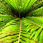 Green fern by Kim Steinberg