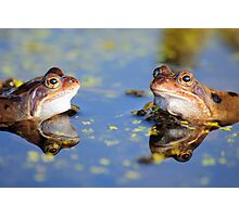 Frogs and Reflection Photographic Print