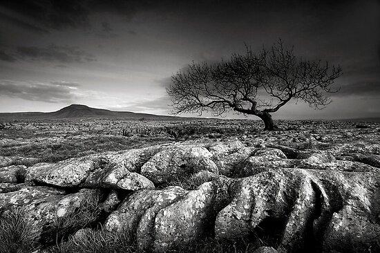 Limestone Pavement Mono by Jeanie