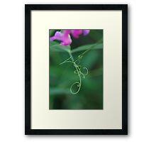 Pea tendrils Framed Print
