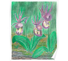 Lady Slippers -oilpastels Poster