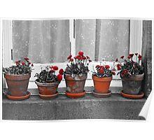 Pot Plants on a Window Sill Poster