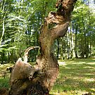 The New Forest: Natural Sculpture by Rob Parsons