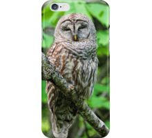 Barred Owl Sleeping iPhone Case/Skin