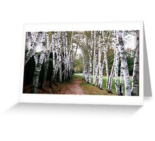 Birch Walk Poster, Section B Greeting Card