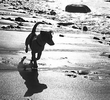 Gilly running on the beach by Teresa Schultz