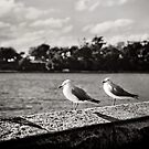 lovebirds by Natalia Campbell