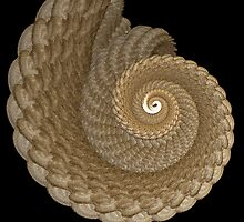 Nautilus by Pam Moore