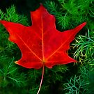 A Fallen Maple Leaf by Marija