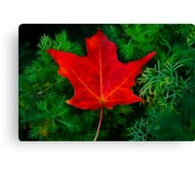 A Fallen Maple Leaf Canvas Print