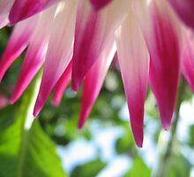 Pink Spikes by Orla Cahill Photography