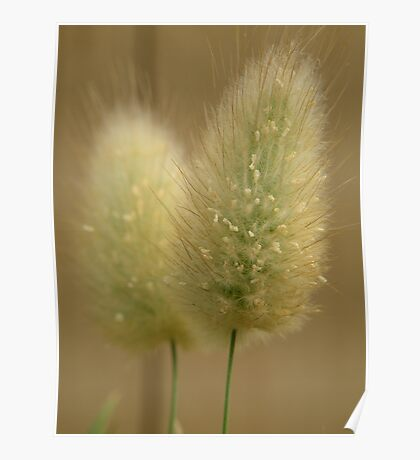 Bunny Tails Poster