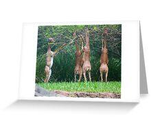 Gerenuks Greeting Card