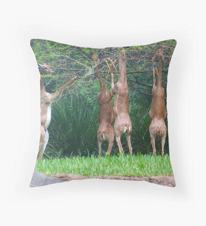 Gerenuks Throw Pillow