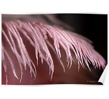 Pink Fluff Poster