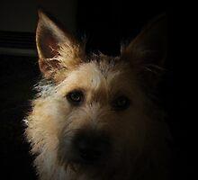 Penny Dog by mklau