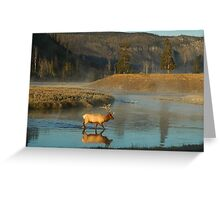 Bull Elk - Yellowstone National Park, Wyoming, USA. Greeting Card