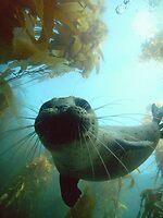 Harbor Seal at Depth by Walt Conklin