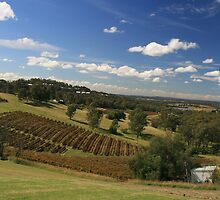 Hunter Valley Vineyards by Jond30