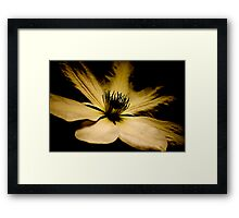 Light from the Darkness Framed Print