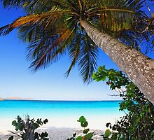Leaning Palm Tree on a Tropical Beach by George Oze