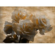 FADED ROSES Photographic Print