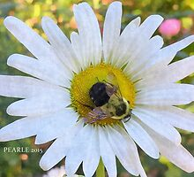 Bee a Daisy by Pearle